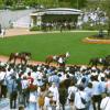 マイルチャンピオンシップ(2015)の出走予定馬情報・前走成績