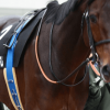 【マイルチャンピオンシップ予想2015】トーセンスターダム、初のマイルで返り咲く?!